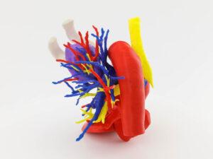Tórax - HT Unidad 3D Médica
